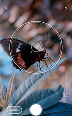 Поиск названия насекомых в приложении по фото