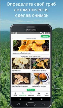 Mushrooms Identify поиск грибов по картинке