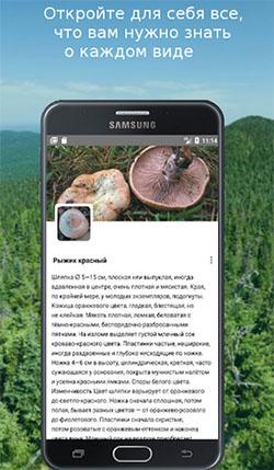 Описание вида грибов в приложении