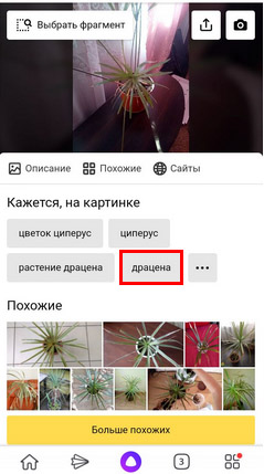 Поиск растений в сервисе Яндекс