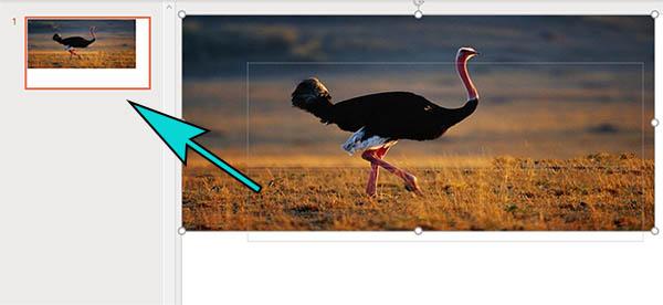 Предпросмотр слайда