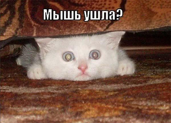 Трусливый кот