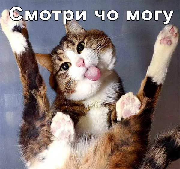 Кот акробат