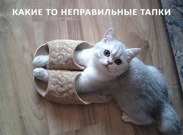 Неправильная обувь для кота